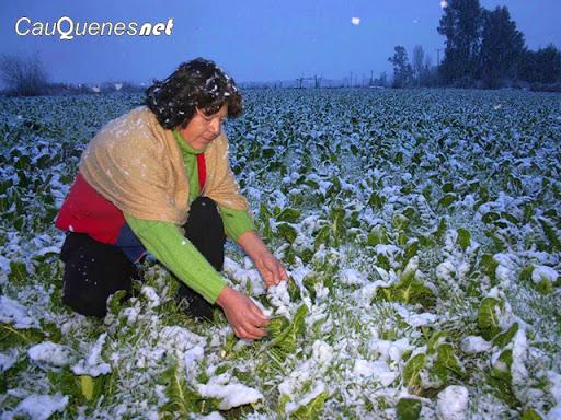 Las heladas: Enemigo latente de los agricultores