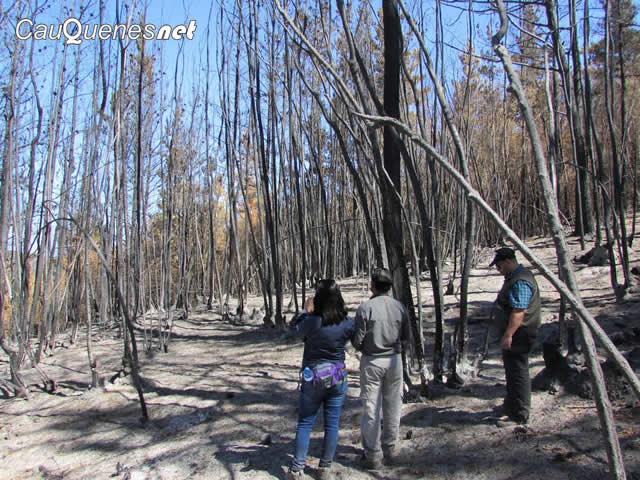 bosque-de-ruil-if-empedrado-02-cqnet