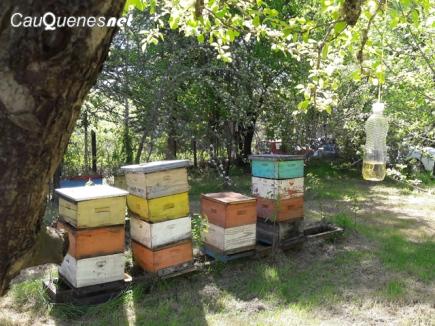 panal de abejas 01-cqnet
