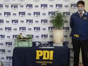 PDI detenido x microtrafico 18oct17 cauquenes 02-cqnet