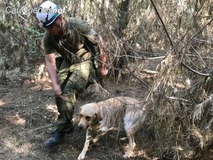 carabineros caninos dakar y Conor 02-cqnet