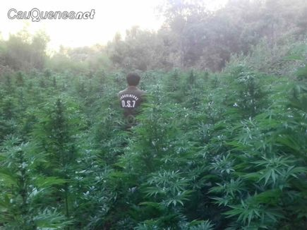 Carabineros os7 decomiso marihuana pelluhue 140218 q02-cqnet