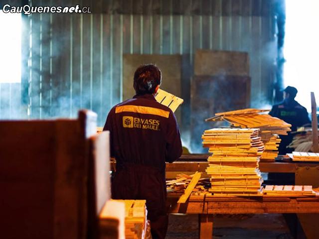 En Cauquenes trabajadores de la cajonera denuncian que no reciben sus sueldos hace más de un mes