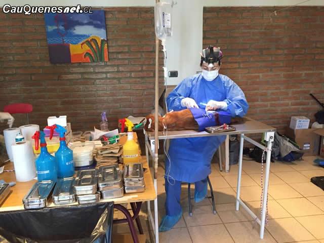 Cauquenes: En Retulemu sigue el proceso de esterilización de mascotas