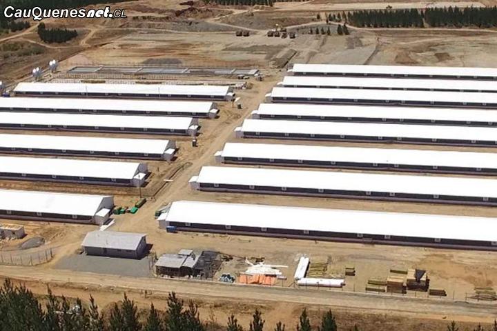 Corte de Apelaciones de Talca rechazó recurso de protección del INDH en contra de la agrícola Coexca