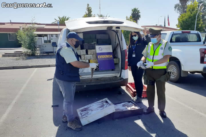 Operativo de Sernapesca y Carabineros detectó 1800 kilos de merluza común ilegal en Maule