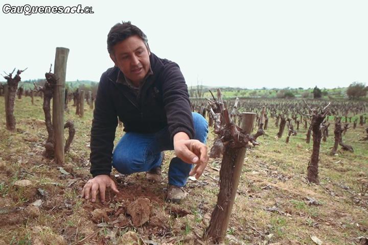 #Cauquenes: El Huaso de #Sauzal y su trabajo por resguardar la cultura vinícola en el Maule